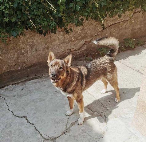 Adopție câine talie medie
