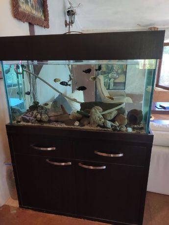 Поръчков аквариум 270 литра с оборудване и риби
