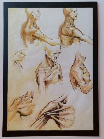 Desene in penita