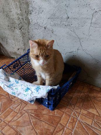 Кошечка Апельсинка, стерелизованая, привита