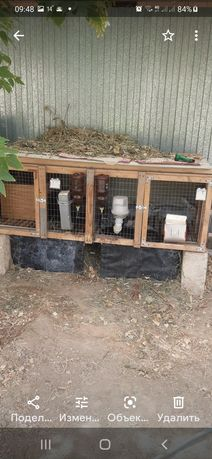 Продаётся кролики клетки 2 шт