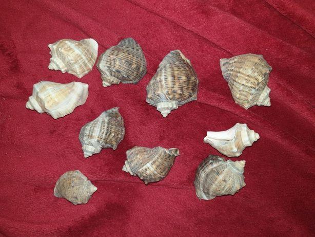 Decoratiuni acvariu broasca testoasa sau pesti, naturale, nu plastic