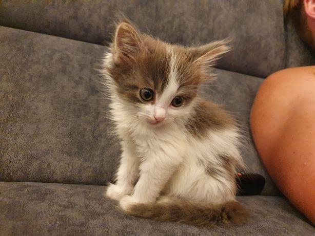 Отдам милую кошечку в добрые руки