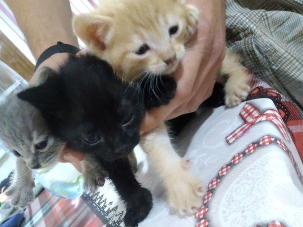 Милые и игривые котята ищут свой дом.