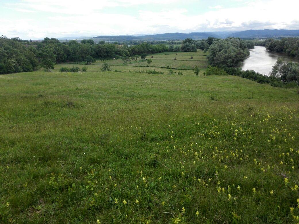 Teren pt cabană la râul Mureș și pentru albine