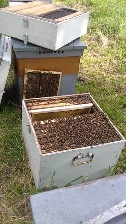 Vand roiuri si familii de albine