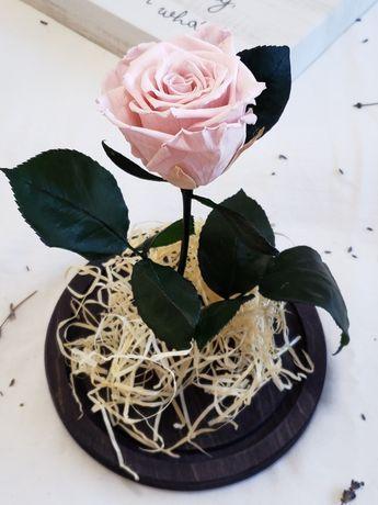 Cupole cu trandafiri nemuritori