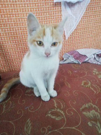 Кошки котята рыжие красавцы