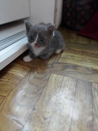 котята! отдам в добрые руки! 1месяц