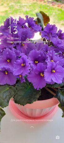 Продам цветы фиалки