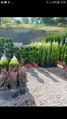plante ornamentale pentru o grădină de vis preț accesibil