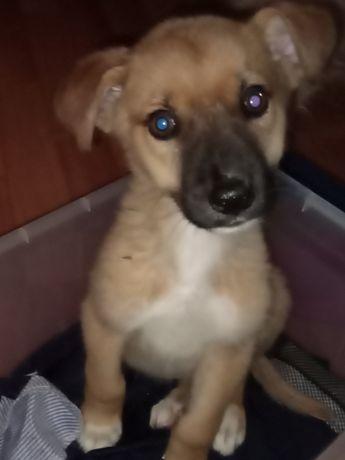 Щенок, мальчик, 1,5 месяца