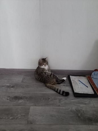 Ищем кошку для вязки бесплатно