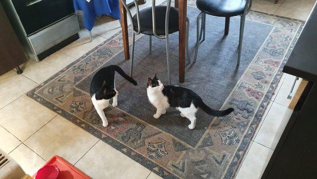 Donam 2 pisicutze sterilizate,suntem din Cumpana,jud.C-ta.