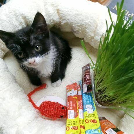 Котенок с лотком в подарок