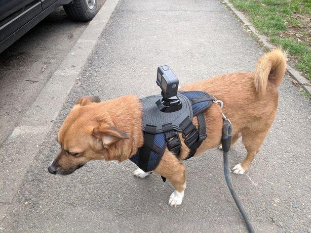 Prindere caine caini 7-54 kg GoPro camera de actiune mount reglabila