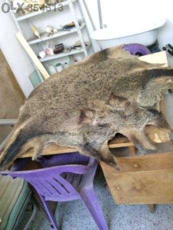 ловни трофеи - кожа от диво прасе