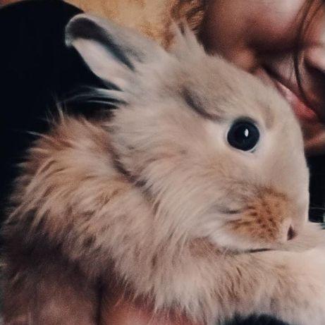 Продаю декоративного кролика