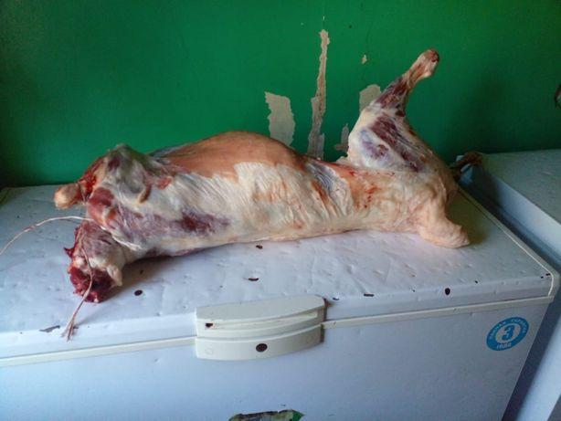 Продам мясо баранины.