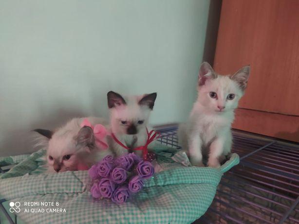 Котята 2 месяца в хорошие руки