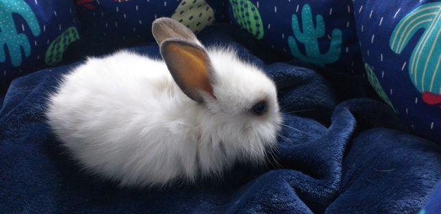 Кролик в наличии