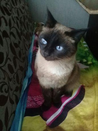 Найдена кошка.