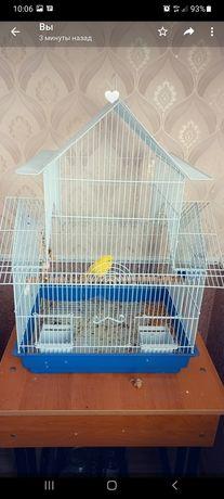 Папугай. Птица 222