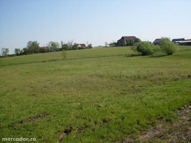 Vind urgent teren ferma în Homorog