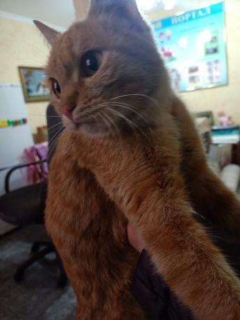 Нашлась кошка! Ухоженная