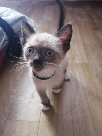 Отдам красивого котенка мальчика