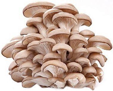 Продам грибы вешанки!!