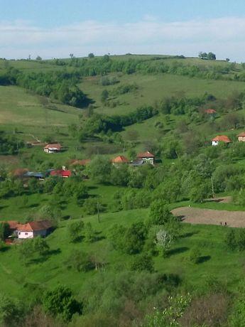 Vând teren în satul Certejul de Jos,  comuna Vorța