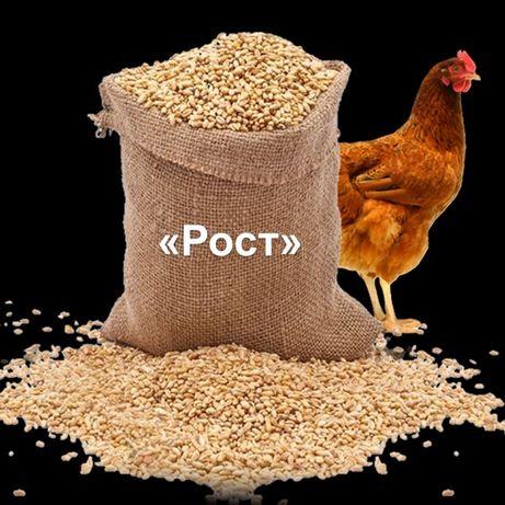 Комбикорм для птицы (РОСТ)
