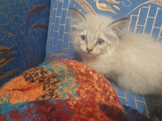 Котёнок мальчик ищет дом, лоточек на отлично
