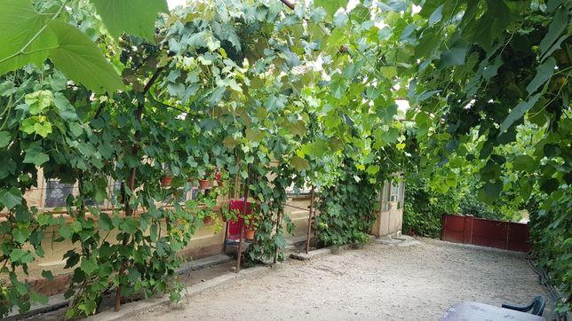 Casa de vanzare in Plesoiu,Olt