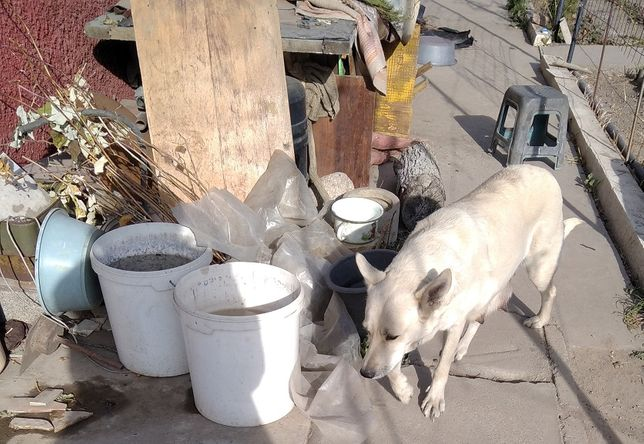 Пропала собака в районе Баковских дач