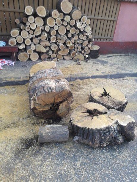 Taiere pomi, crengi , copaci, arbori , lemne foc cu drujba
