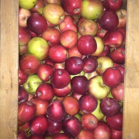Приодам яблоки
