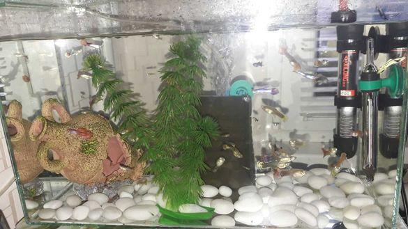 Оборудван аквариум с рибки