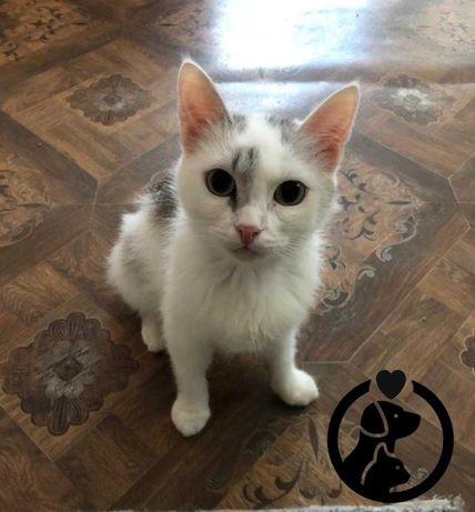 Кошечка, 11 месяцев, мечтает обрести семью