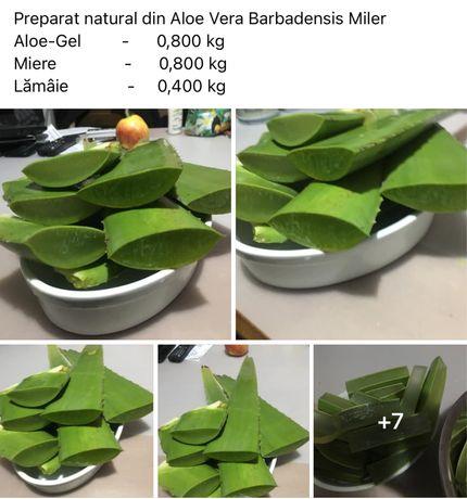 Aloe vera barbadensis miller frunze la kg