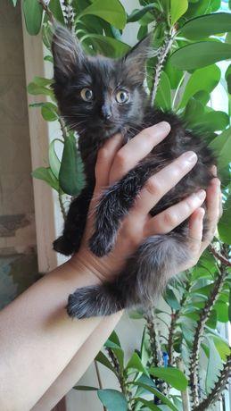 Милая  котенок - девочка.