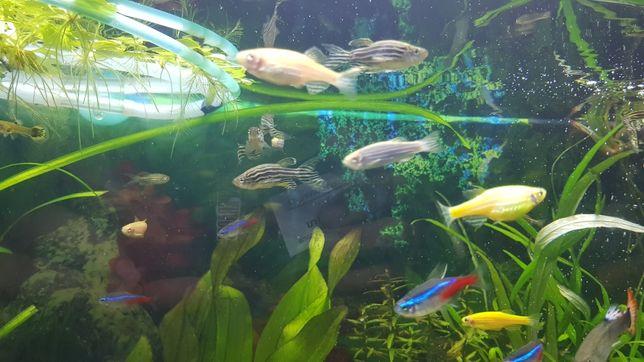 Vand pesti acvariu gupy zebre neoni xifo ancistrus sae sanitari plante