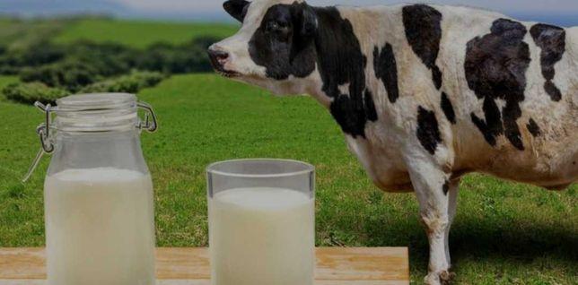 Продаются бычки, тёлки, нетели, коров, телята, абузау, КРС, МРС БЫК664
