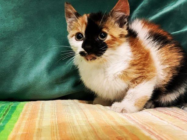 Pui pisica pt adopție in Constanta