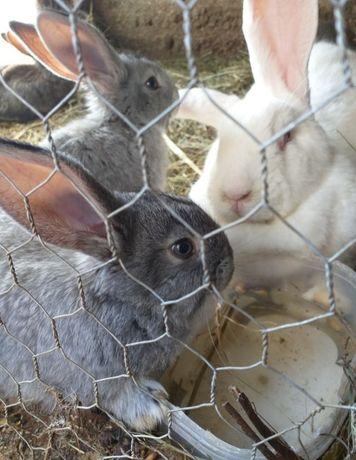 Afacere cu iepuri de diferite rase mărimi și culori