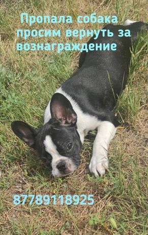 Пропала собака в районе базара нур