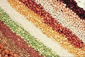 посевные семена масленичных культур, зерновых, зернобобовых, кормовых