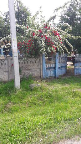 Vand casa sat Tismana, comuna Devesel, jud.Mehedinti