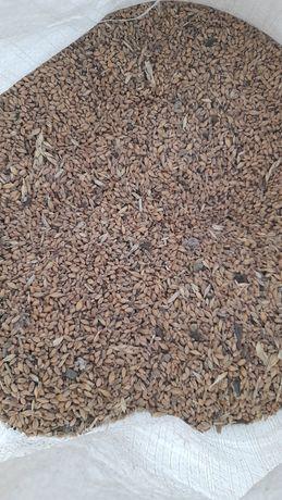 Продам корма зерно пщеница